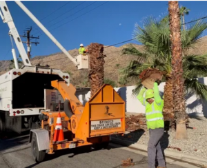 Palm Tree Removal in Perth