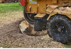 stump removal Sydney from stump removal Sydney